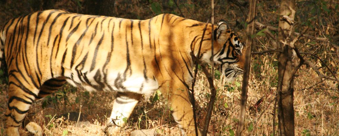 slider-indien-ranthamborenationalpark